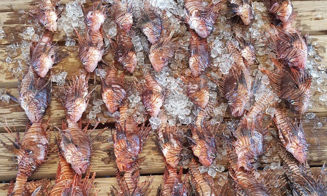 Lionfish Eradication Dives